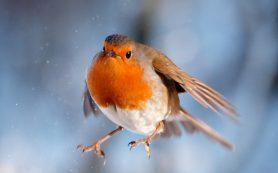 Холодный климат заставил птиц поумнеть