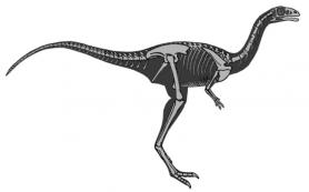Динозавр терял зубы по мере взросления