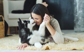 Женщины предпочитают говорить с собаками, как с детьми