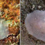 Новый вид моллюска назвали в честь Дэвида Боуи