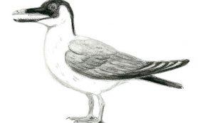 Арктические зубастые птицы жили в тепле