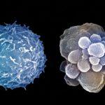 Чем занимались биологи в 2016 году – часть вторая