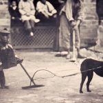 Собаки и обезьяны отказались дружить с эгоистами