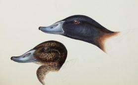 Краудсорсинг помог ученым понять эволюцию птичьих клювов