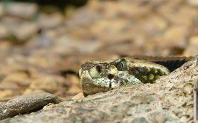 Создана искусственная кожа, которая чувствует изменения температуры, как змея