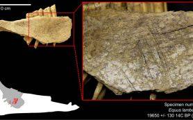 Кости животных отодвинули заселение Америки в прошлое