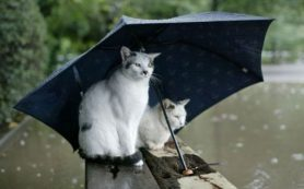 Как формируется погода Саратова
