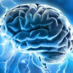 Мозг производит фруктозу из глюкозы