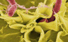 Как бактерии влияют на аппетит
