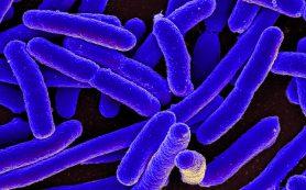 Антибиотики ускоряют рост бактерий