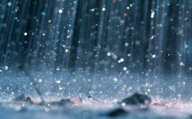 Ученые объяснили влияние дождя на распространение бактерий