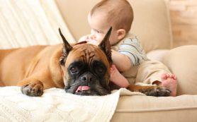 Собаки похожи на двухлетних детей больше, чем шимпанзе