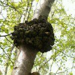 Вулкан превращает полезные грибы во вредны