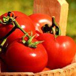Биоинженеры создали помидоры без семян