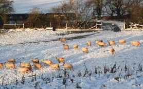 Малый ледниковый период назвали виновником британской аграрной революции