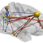 Тренировка памяти меняет мозг