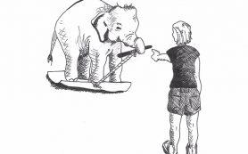 Слоны осознают свое тело