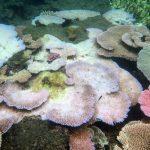 Две трети кораллов Большого барьерного рифа обесцветились