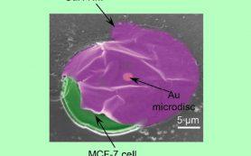 Наносенсоры научились прилипать к живым клеткам