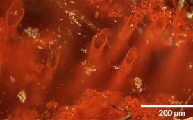 Древнейшие следы жизни нашли в Квебеке