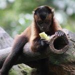 Мозг приматов вырос на фруктах