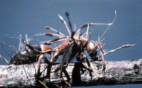 Грибы и бактерии борются с колорадскими жуками