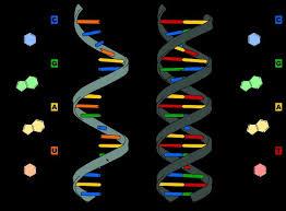 Как клетка распутывает запутанную РНК