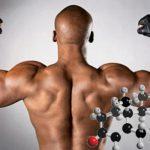 Тестостерон помешал мозгу мужчин проводить «работу над ошибками»