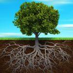 Растения ищут воду «на слух»