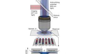 Из холодных атомов лития и света впервые собрали антиферромагнетик