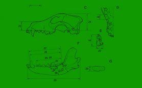 За Полярным кругом нашли древнейшие следы собаководства