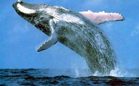 Почему киты стали большими