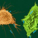 Стрессовый белок поможет в борьбе с сепсисом