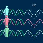 Исследователи «разоблачили» букву в последовательности ДНК, которая настраивает организм против себя