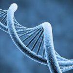 Биологи усомнились в пользе широкомасштабных генетических исследований