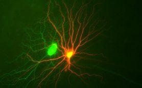 Как мозг видит «поток движения»