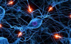Все эпилептические припадки развиваются по единой схеме