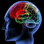 В ТГУ исследуют, что происходит в мозгу человека при обучении