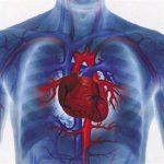 Склонность к заболеваниям сердца связали с успехом размножения