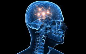 В мозге нашли «источник здоровья и долголетия»
