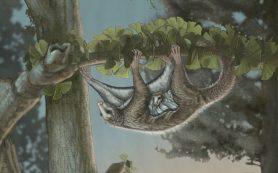 В Китае нашли планирующих млекопитающих Юрского периода