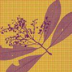 Глубокое обучение привлекли к распознаванию образцов в гербариях