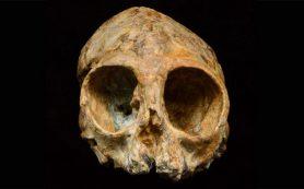 Человеческие корни еще глубже ушли в Африку