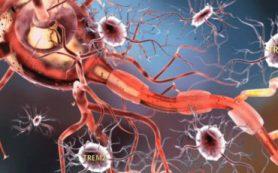 Ученые поняли, почему при болезни Альцгеймера клетки «переваривают» сами себя