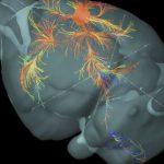 Китай запускает «фабрику» по изучению мозга