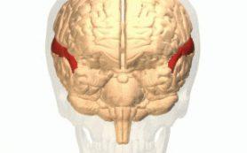 Как мозг понимает «музыку слов»