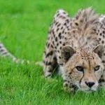 Дроны и компьютерное зрение помогут следить за животными в дикой природе