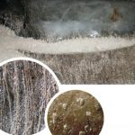 Геологи МГУ выяснили, что древние бактерии устойчивы к антибиотикам