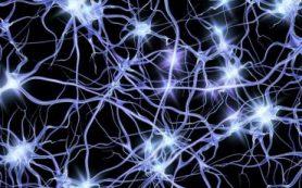 Профессор Александр Горбань: «Нейросети – база для искусственного интеллекта»