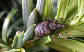 Биолог МГУ объяснил развитие насекомых из неоплодотворённых половых клеток